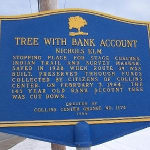 Tree with Bank Account